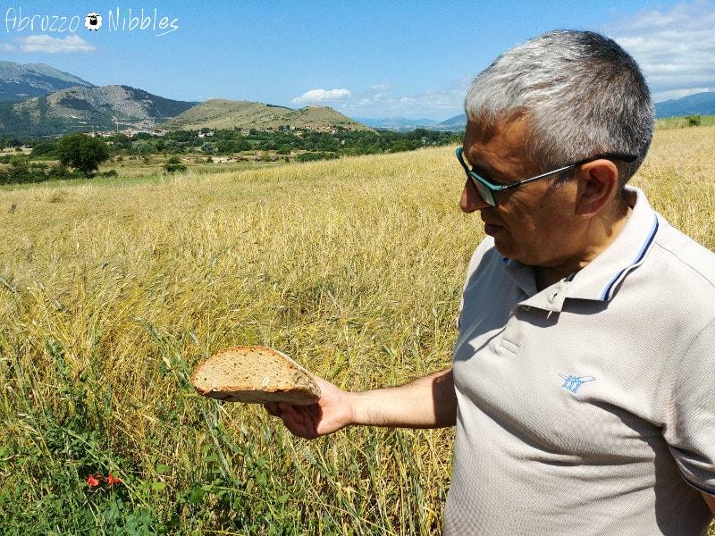 Campo di grano senatore cappelli a San Demetrio ne' Vestini
